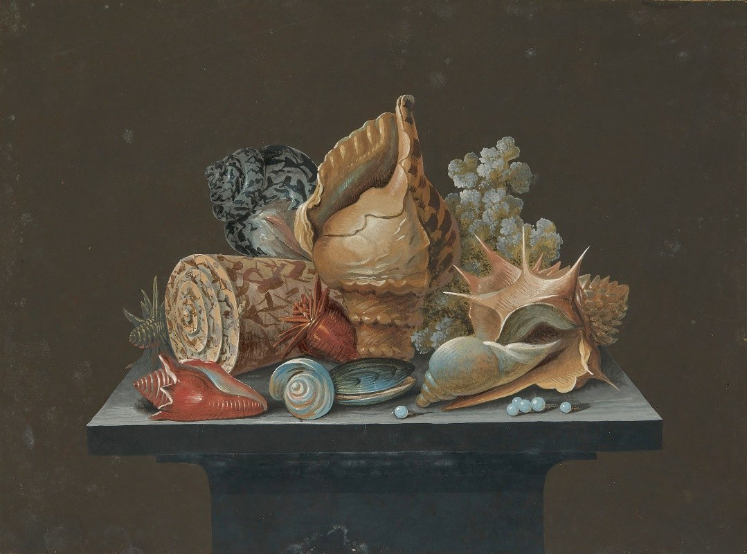 Unknown - Still life with shells