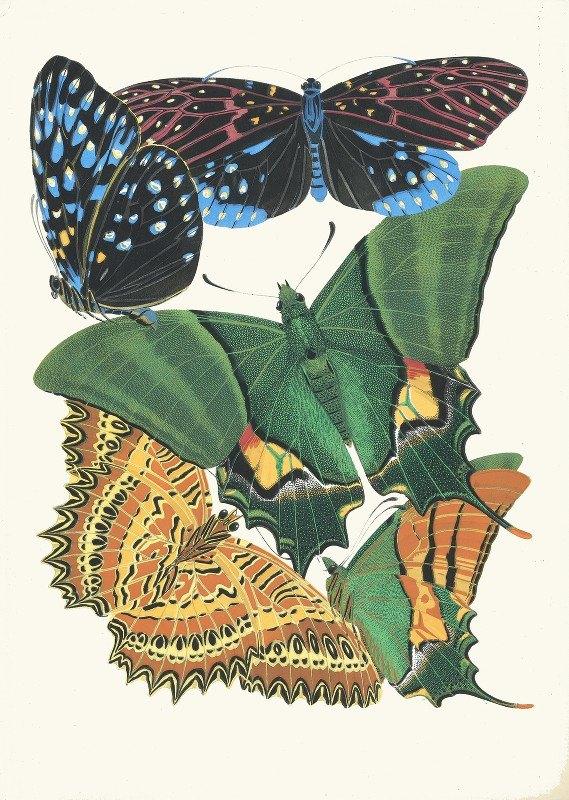 Emile-Allain Séguy - Papillons, Pl. 6