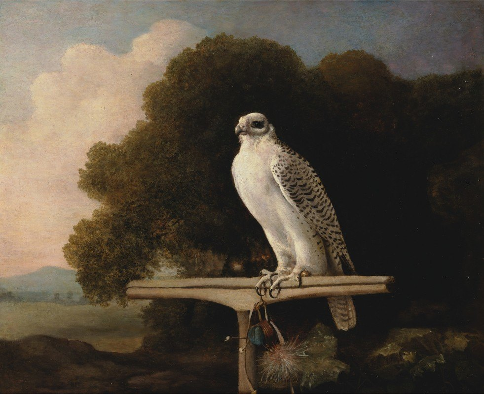 George Stubbs - Greenland Falcon
