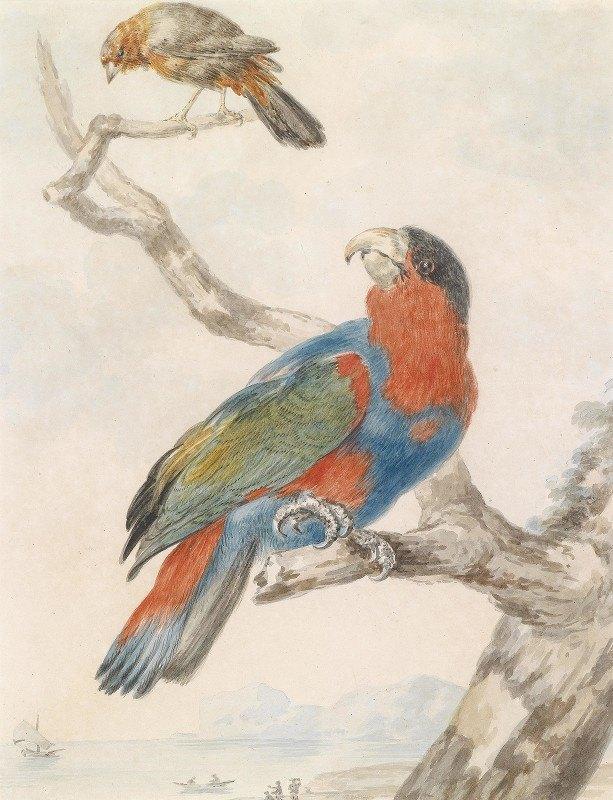 Abraham Meertens - Papagei