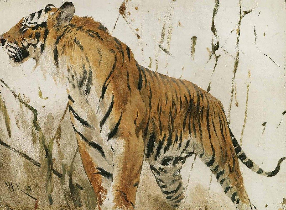 Wilhelm Kuhnert - Study Of A Tiger