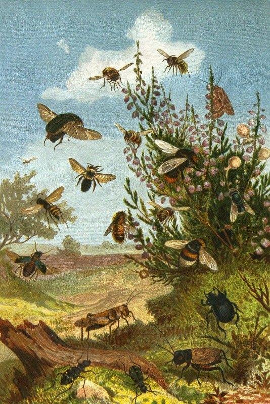 Alfred Edmund Brehm - Die Insekten, Tausendfüssler und Spinnen Pl 01