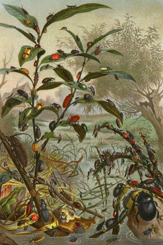Alfred Edmund Brehm - Die Insekten, Tausendfüssler und Spinnen Pl 02