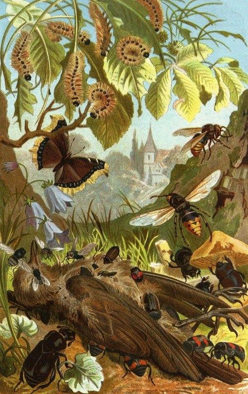 Alfred Edmund Brehm - Die Insekten, Tausendfüssler und Spinnen Pl 03