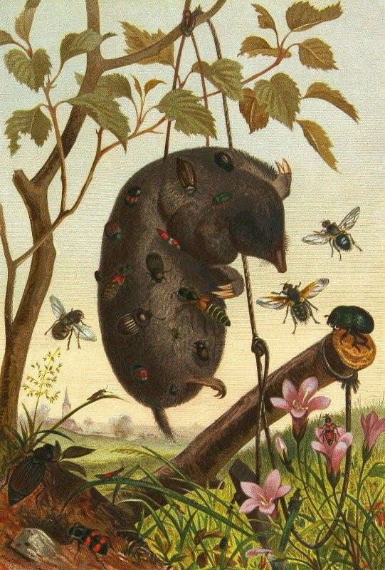 Alfred Edmund Brehm - Die Insekten, Tausendfüssler und Spinnen Pl 04