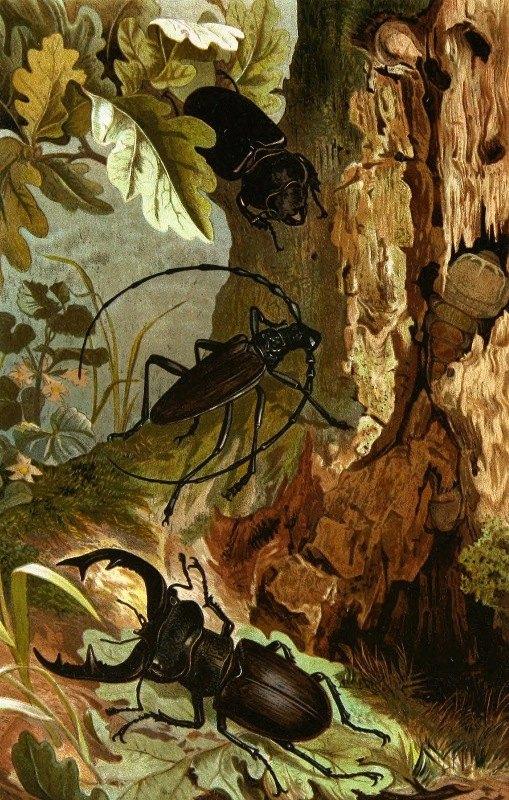Alfred Edmund Brehm - Die Insekten, Tausendfüssler und Spinnen Pl 05