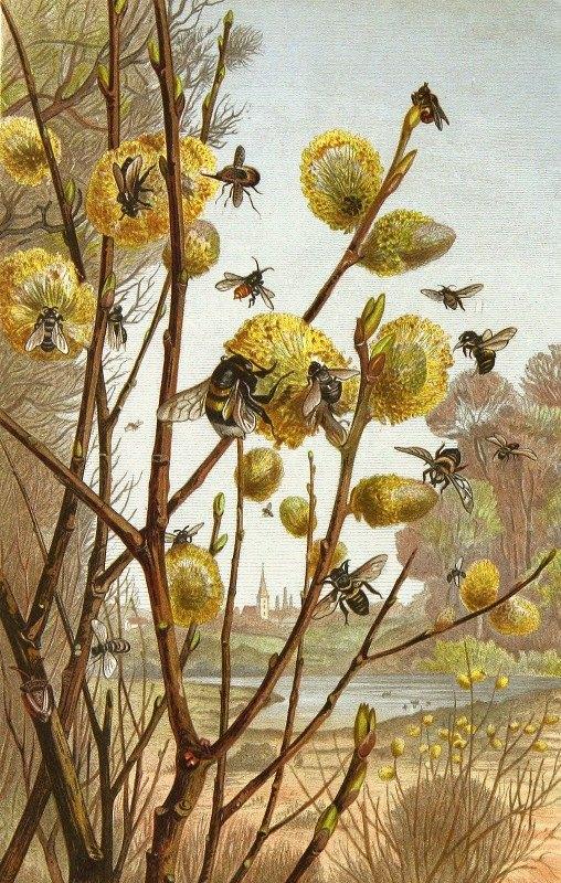 Alfred Edmund Brehm - Die Insekten, Tausendfüssler und Spinnen Pl 07