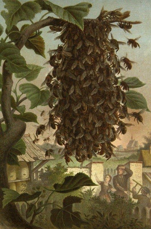 Alfred Edmund Brehm - Die Insekten, Tausendfüssler und Spinnen Pl 08