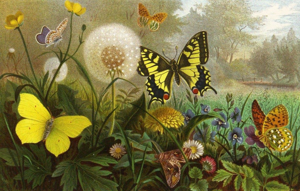 Alfred Edmund Brehm - Die Insekten, Tausendfüssler und Spinnen Pl 10