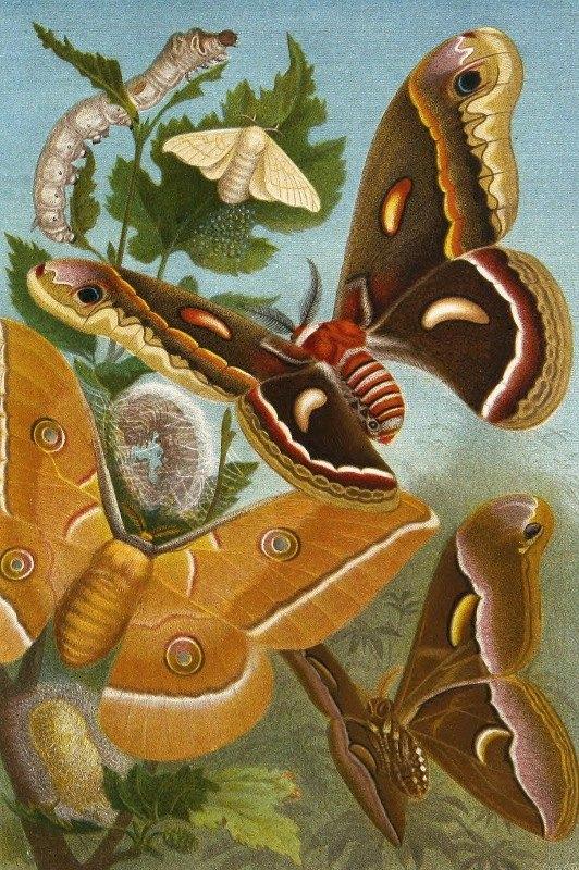 Alfred Edmund Brehm - Die Insekten, Tausendfüssler und Spinnen Pl 11