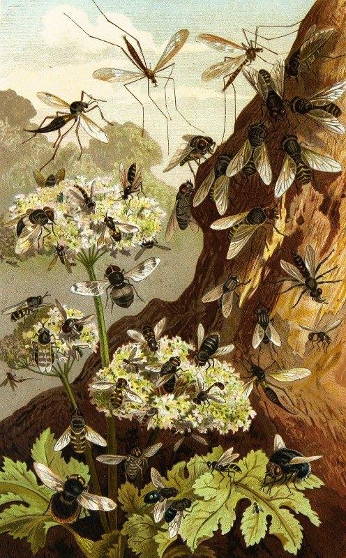 Alfred Edmund Brehm - Die Insekten, Tausendfüssler und Spinnen Pl 13