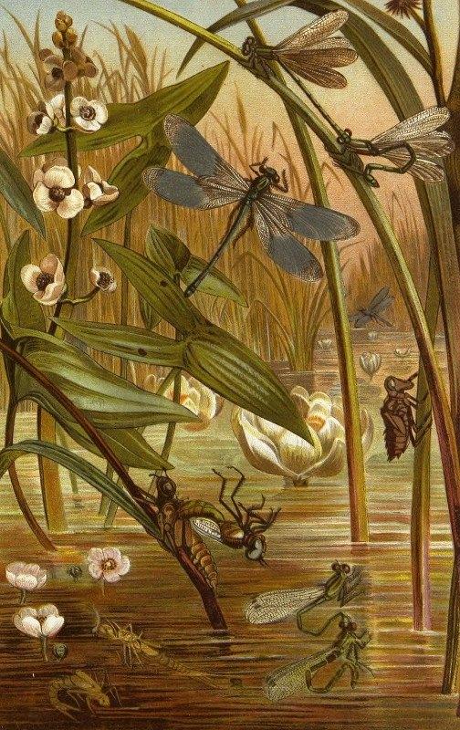 Alfred Edmund Brehm - Die Insekten, Tausendfüssler und Spinnen Pl 15