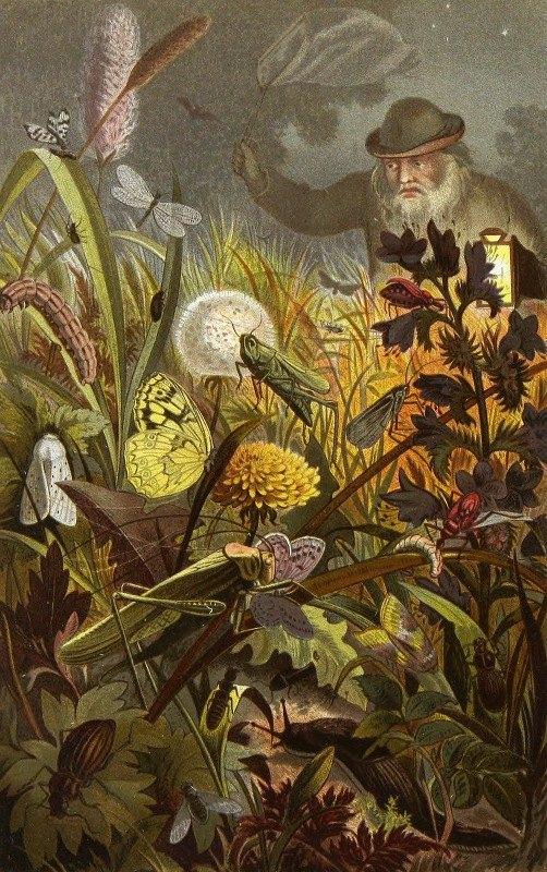 Alfred Edmund Brehm - Die Insekten, Tausendfüssler und Spinnen Pl 18