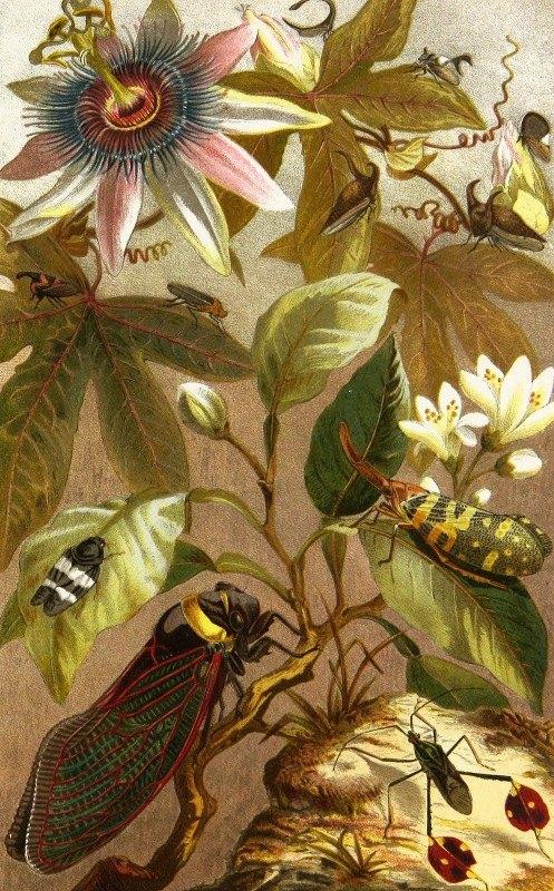 Alfred Edmund Brehm - Die Insekten, Tausendfüssler und Spinnen Pl 19