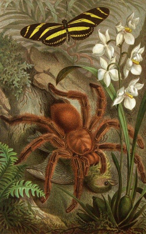 Alfred Edmund Brehm - Die Insekten, Tausendfüssler und Spinnen Pl 21