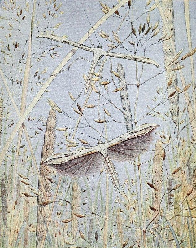Paul-Andre Robert - Le Ptérophore Ptérodactyle