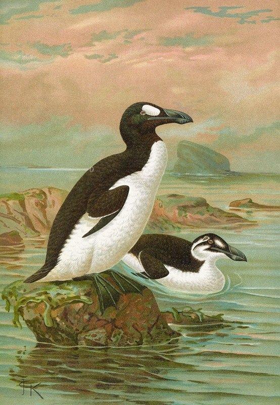 Johann Friedrich Naumann - Alca impennis L., Riesenalk