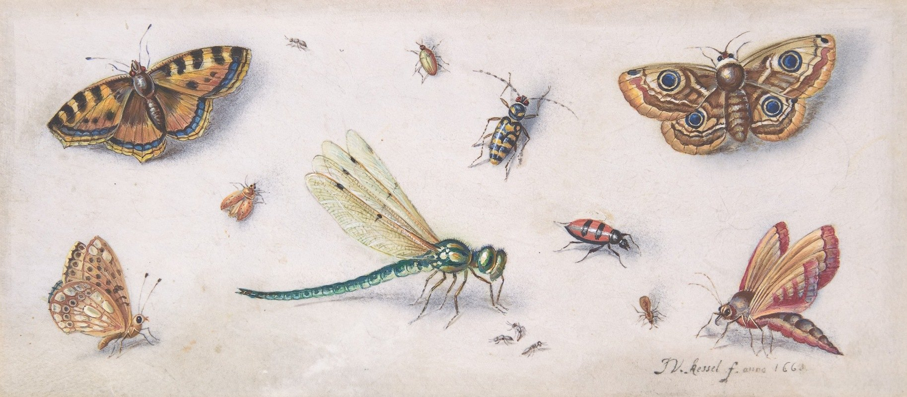 Jan Van Kessel The Elder - Insects, Butterflies, and a Dragonfly