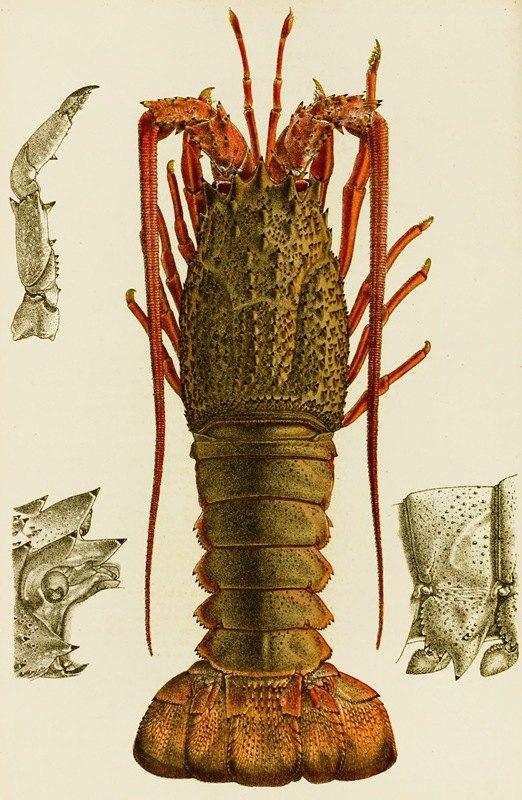 Frederick McCoy - Crustacea I