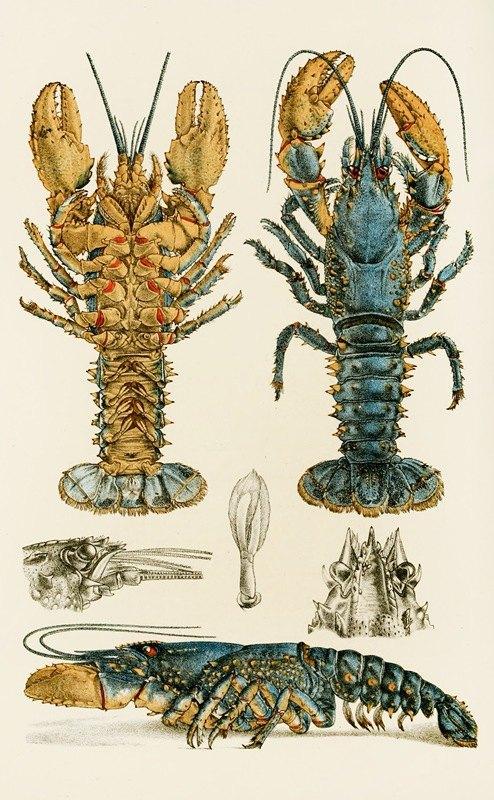 Frederick McCoy - Crustacea II