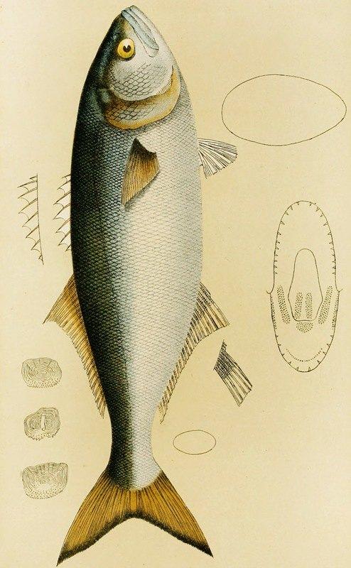 Frederick McCoy - Fishes VIII