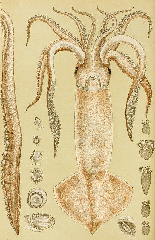 Frederick McCoy - Mollusca I