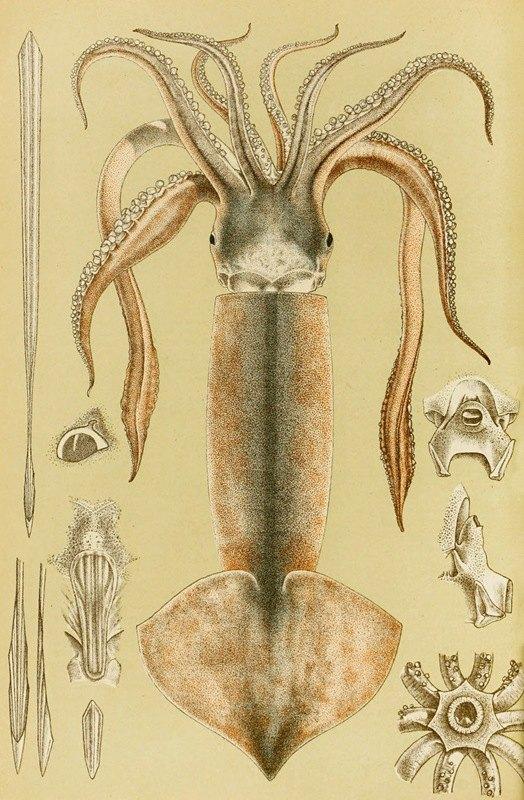 Frederick McCoy - Mollusca II