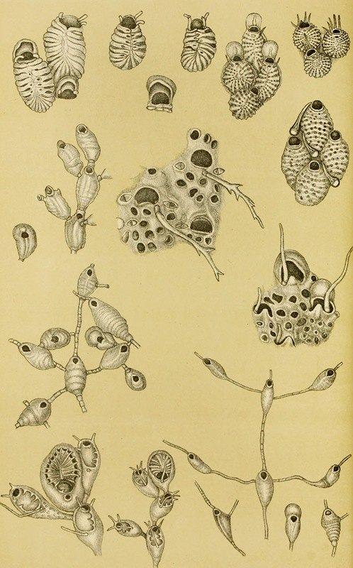 Frederick McCoy - Polyzoa XV