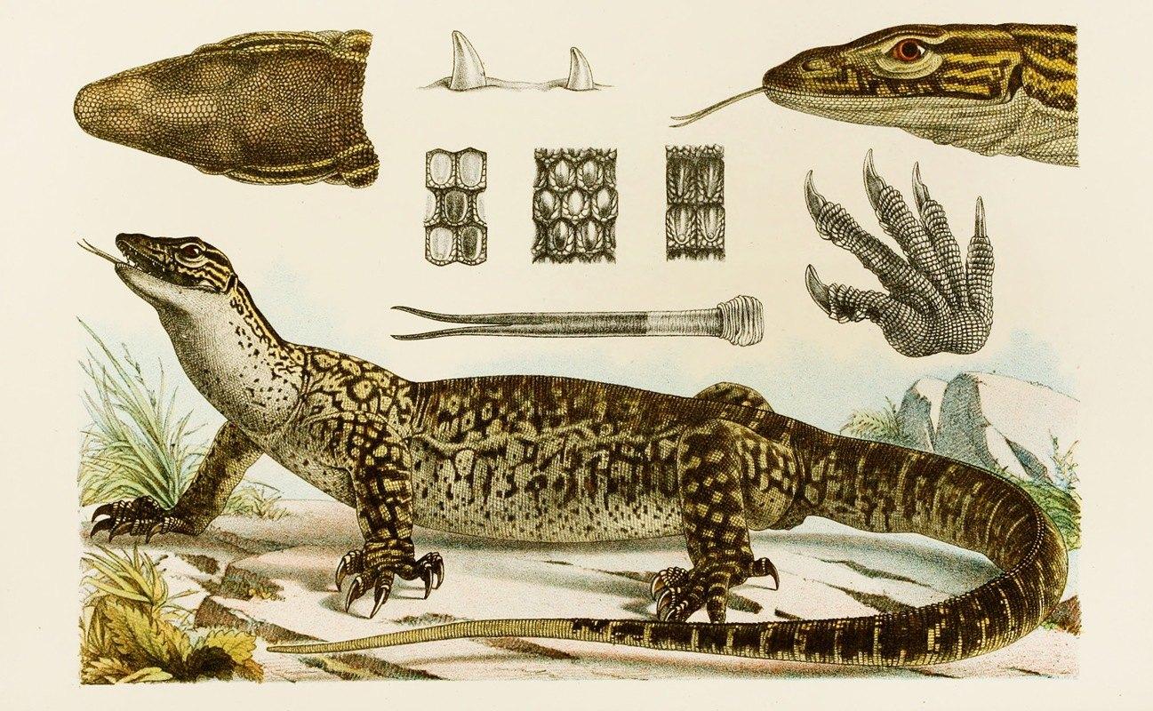 Frederick McCoy - Reptiles I
