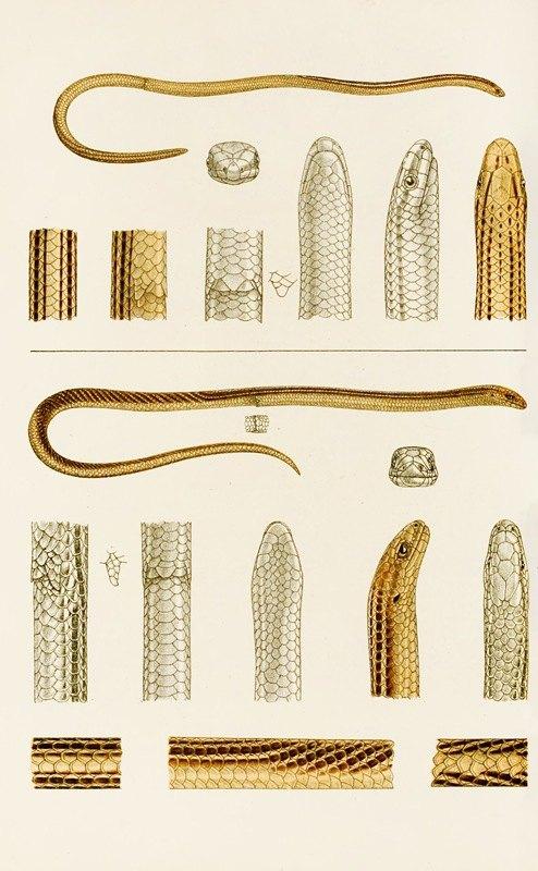 Frederick McCoy - Reptiles IV
