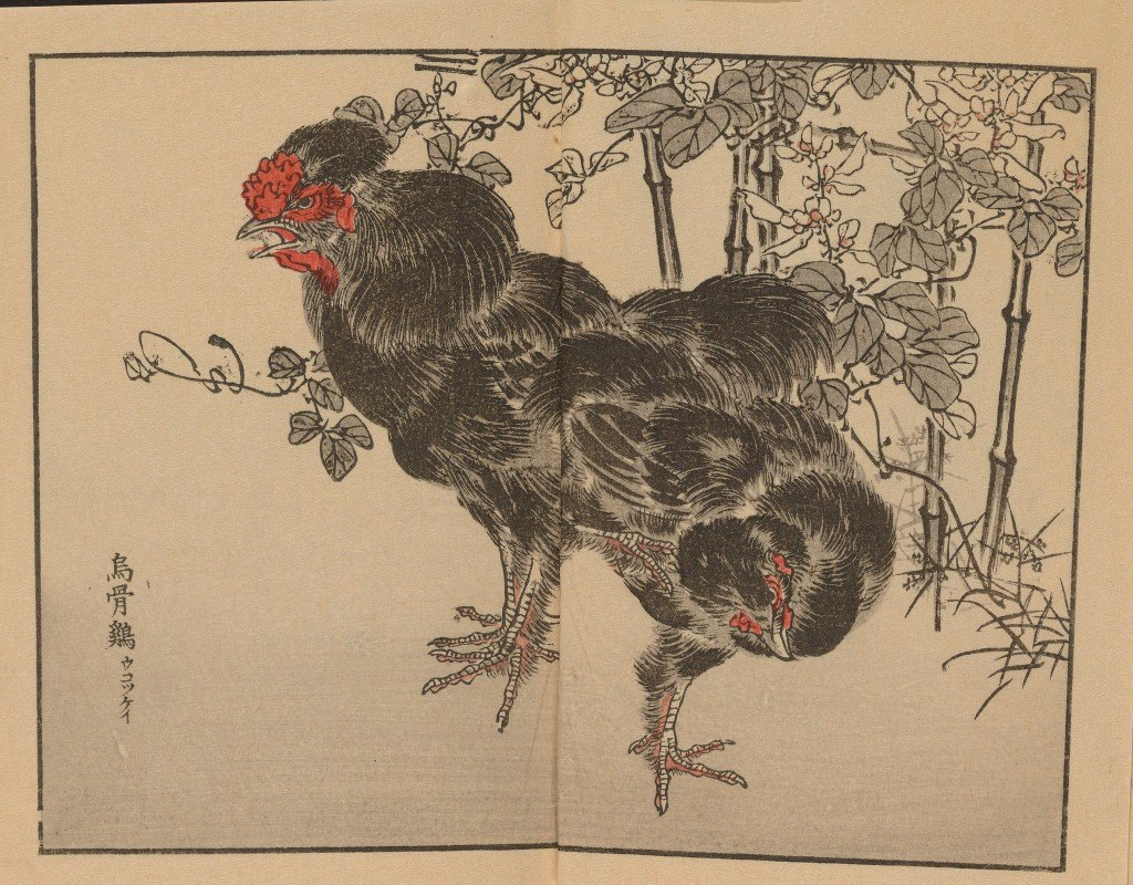 Kōno Bairei - Bairei gafu, Pl.41