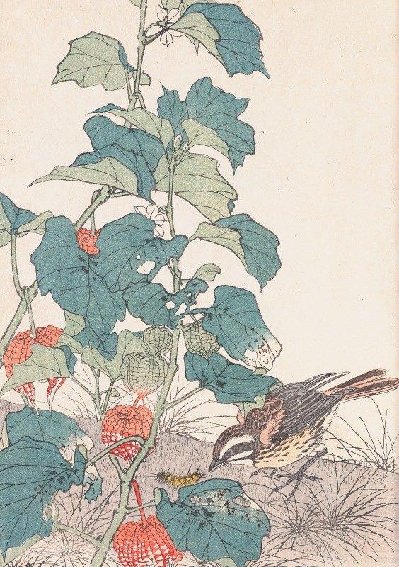 Imao Keinen - Keinen kachō gafu, Pl.37