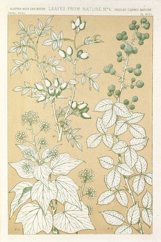 Owen Jones - Leaves from Nature No.6